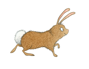 illustration of a cottontail bunny